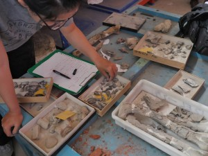 Sorting through fossils in the IVPP's warehouse