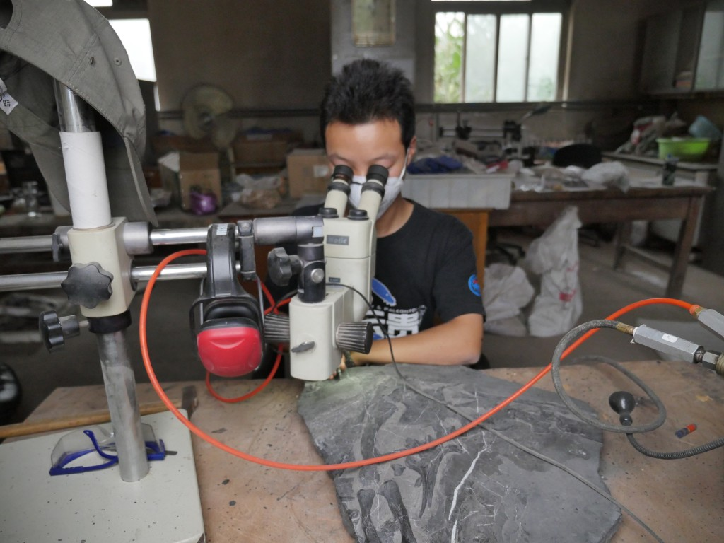A technician prepares a dinosaur fossil at the IVPP.